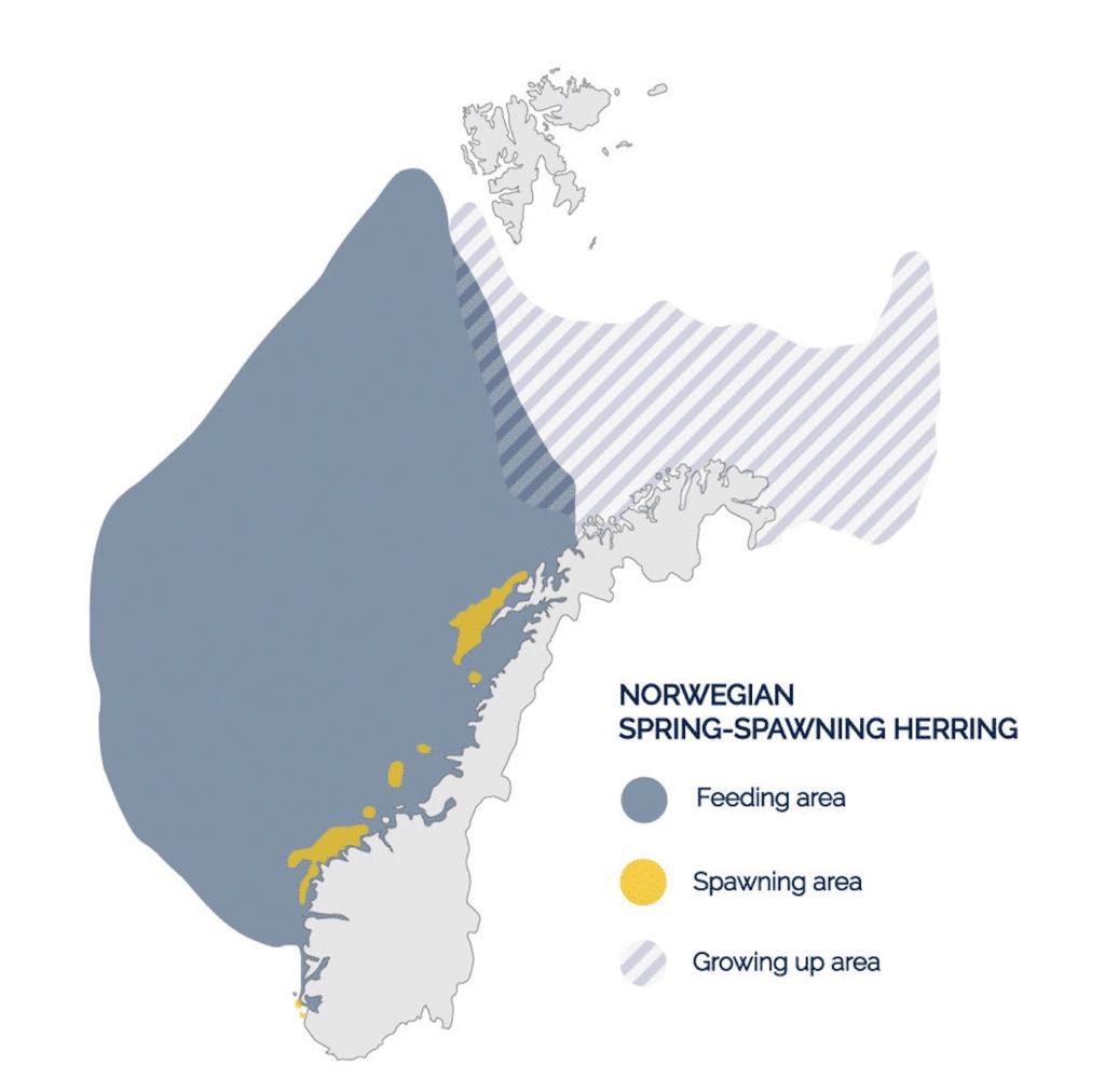Herring spawning map